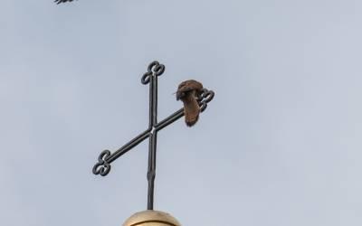 Tierisch: Turmfalken der Pfarrkirche Mieders